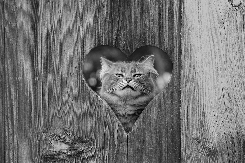 кот, забор, природа, животное, фон, Sergii Vidov