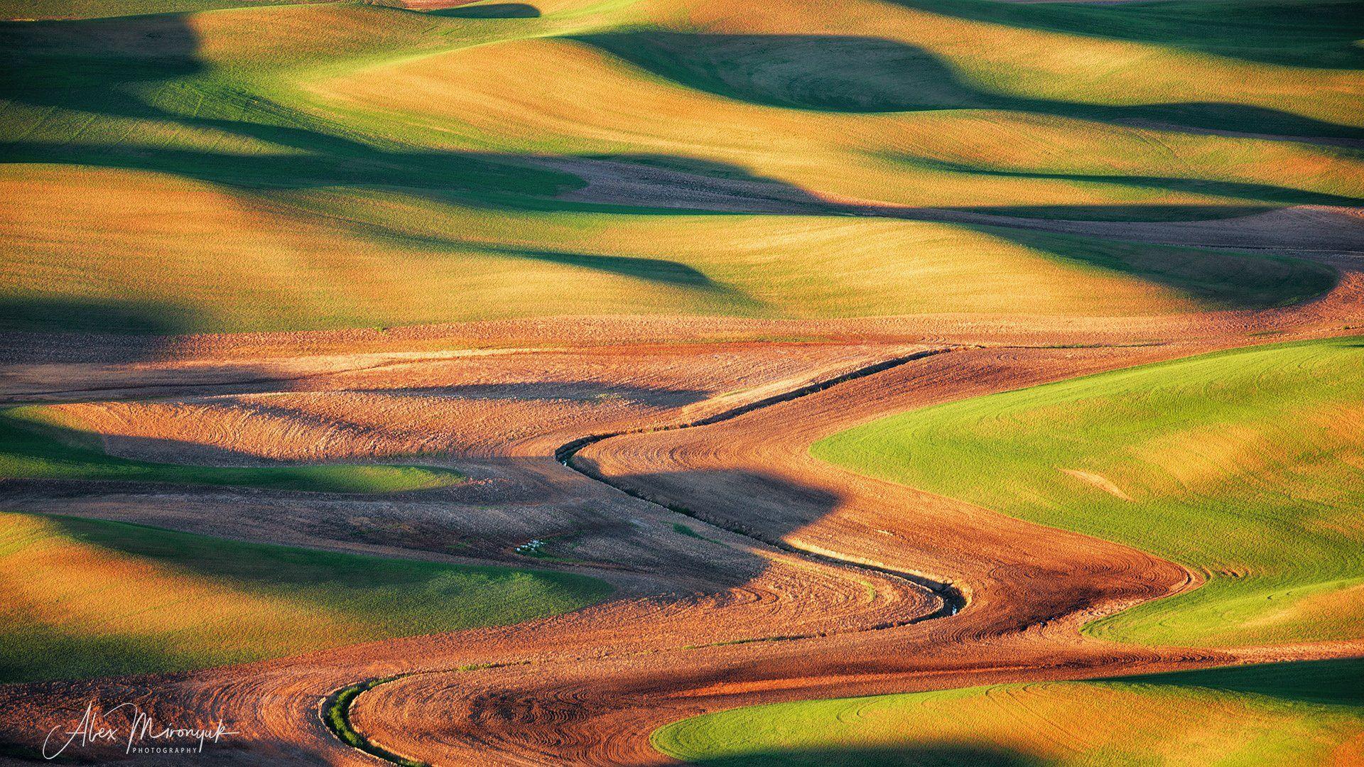 сша, вашингтон, палуз, поля, холм, пшеница, рожь, овес, рапс, абстракция, рассвет, закат, волны, пастораль, Alex Mironyuk