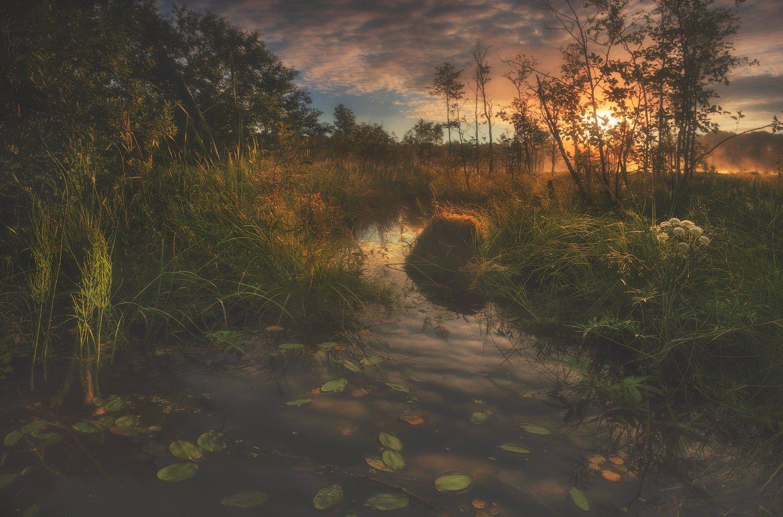 питер, болото, рассвет, туман, лето, пейзаж, Таня She (Aiya)