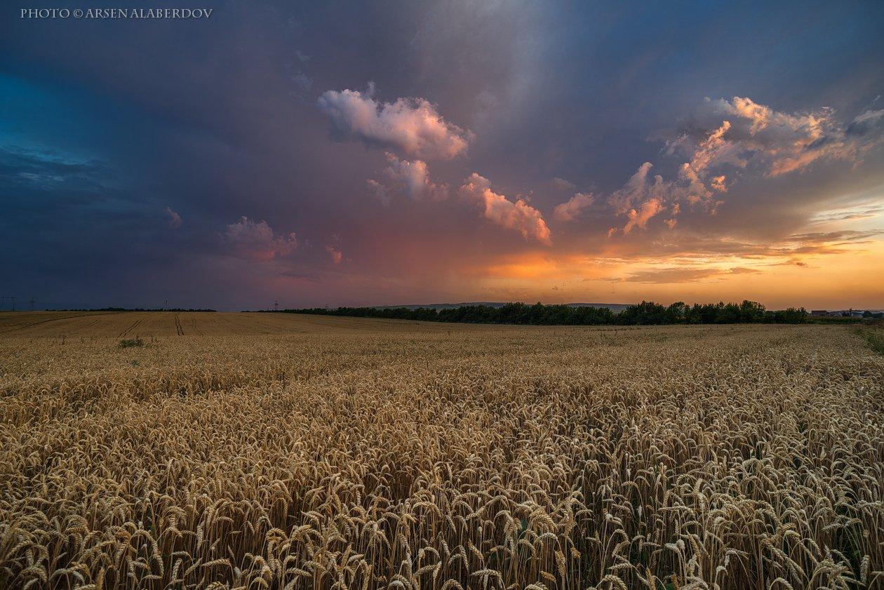 поле,пшеница,рожь,тучи, солнечный свет, скалы, холмы, долина, облака, путешествия, туризм, карачаево-черкесия, кабардино-балкария, северный кавказз , закат, свет, лучи, АрсенАл
