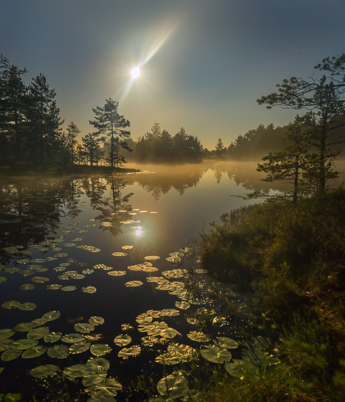 фототур, лето,  ленинградская область, деревья, сосна, остров, полнолунье, луна, ночь, туман, отражение, озеро., Лашков Фёдор