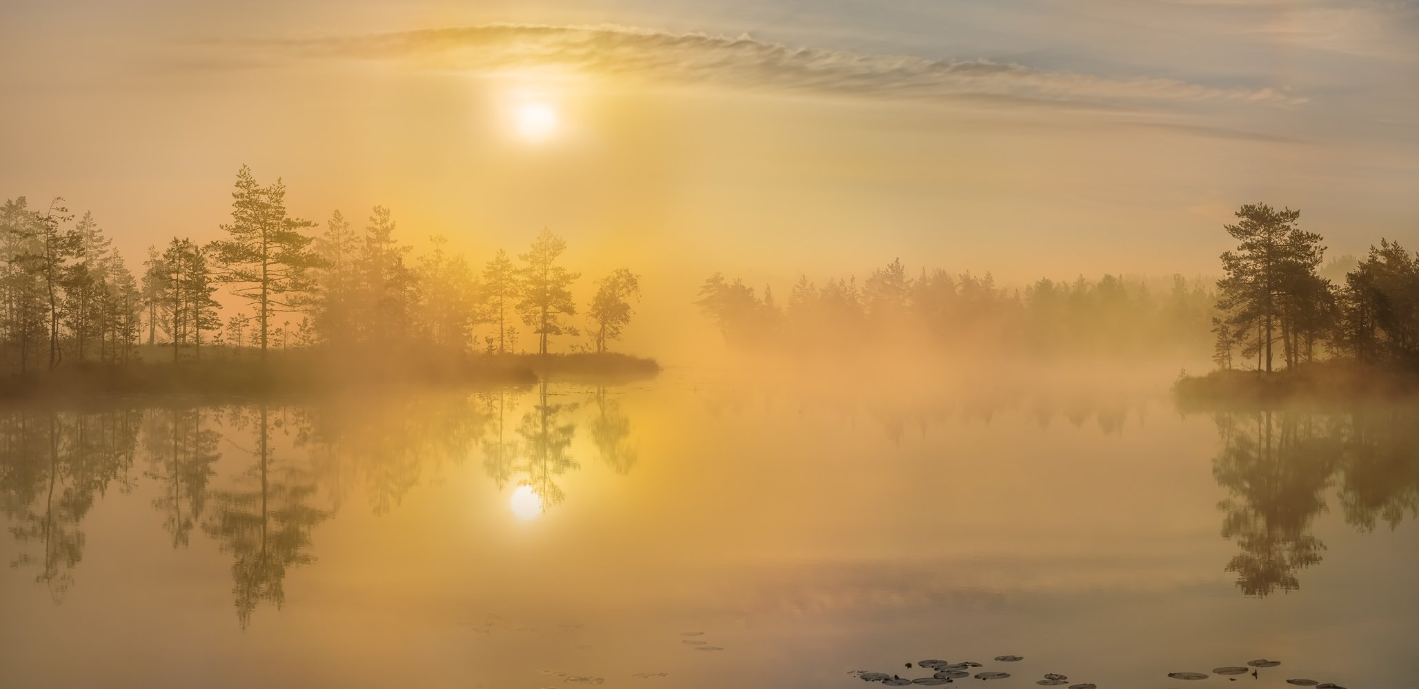 фототур, лето,  ленинградская область, деревья, сосна, остров, озеро, рассвет, туман, солнце, отражение., Лашков Фёдор