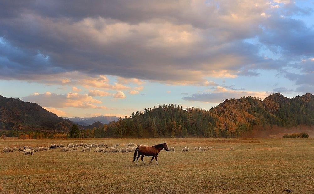 пейзаж, природа, горы, вечер, закат, лошадь, алтай, Sokolova Tatiana