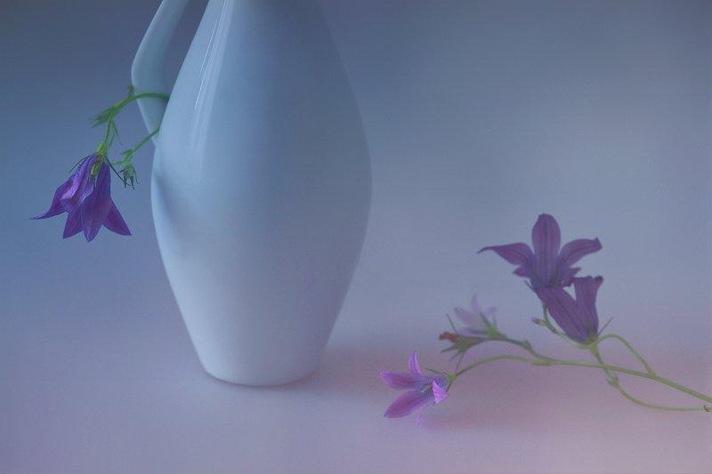 колокольчики, фото, натюрморт, цветы, Ольга Горелова