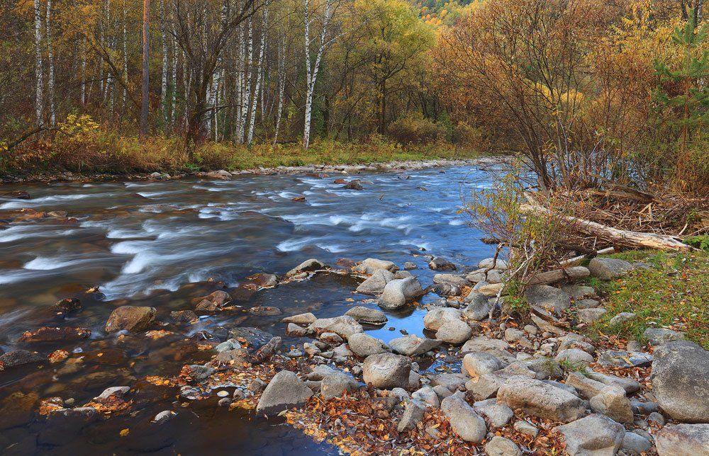 природа, пейзаж, осень, лес, река, алтай, Sokolova Tatiana