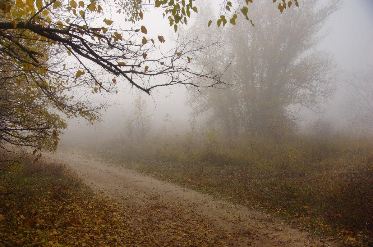 туман, утро, лес, Евгений Смердов