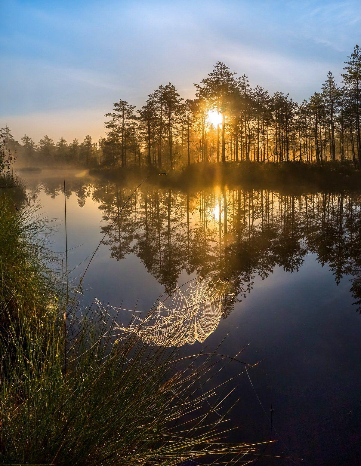 фототур, лето,  ленинградская область, деревья, сосна, озеро, рассвет, туман, солнце, отражение, паутина, лес., Лашков Фёдор