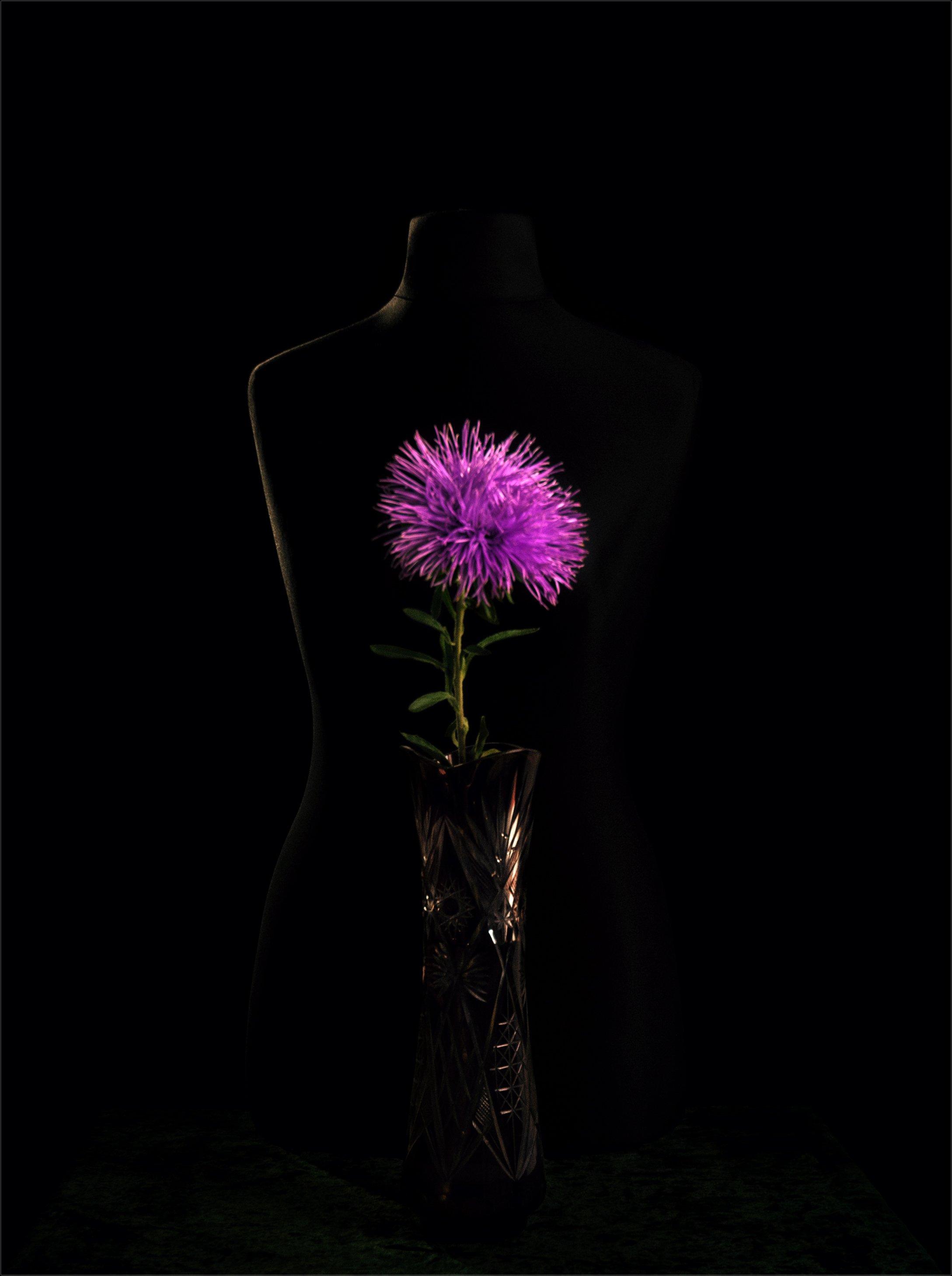 still life, натюрморт,   винтаж, минимализм, астра, цветок, ваза, манекен, бюст, Михаил MSH