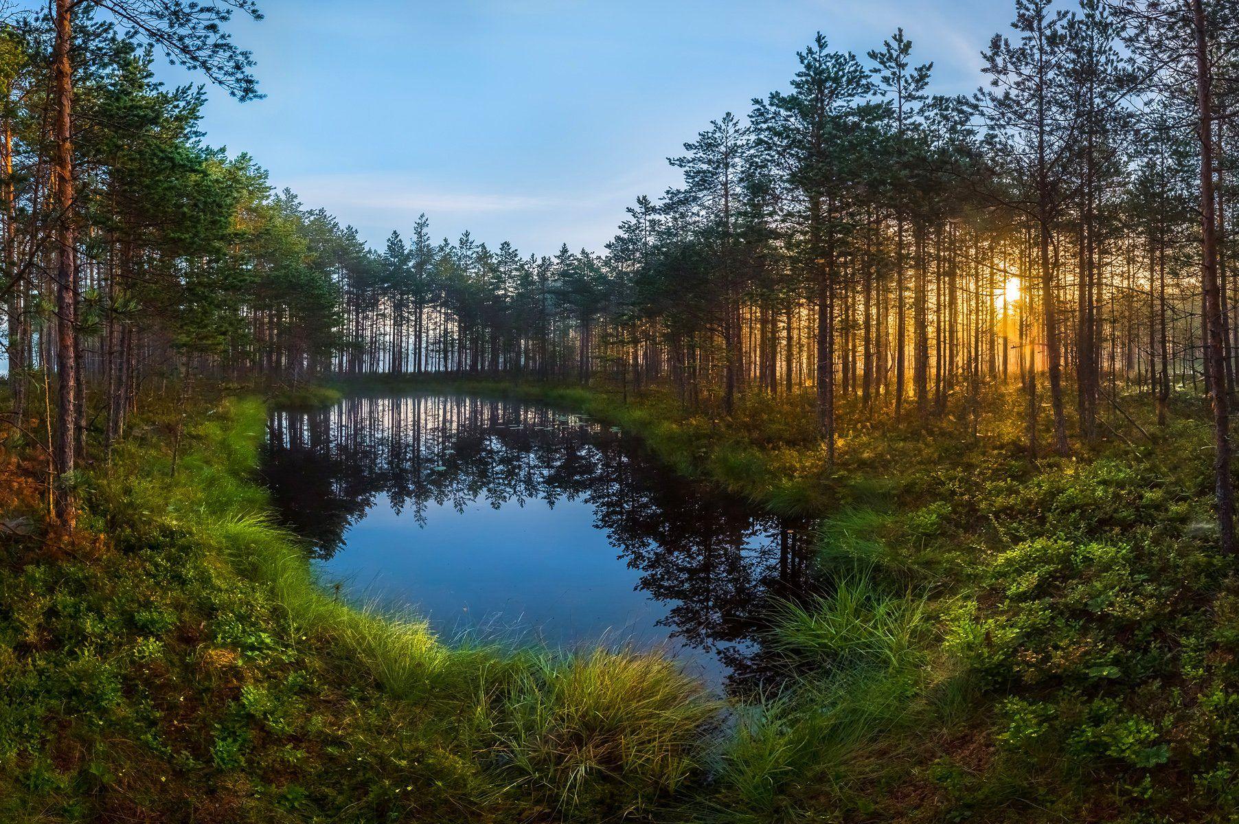ленинградская область, фототур, рассвет, сосны, озеро, болото, лето, мох, лес, отражение., Лашков Фёдор