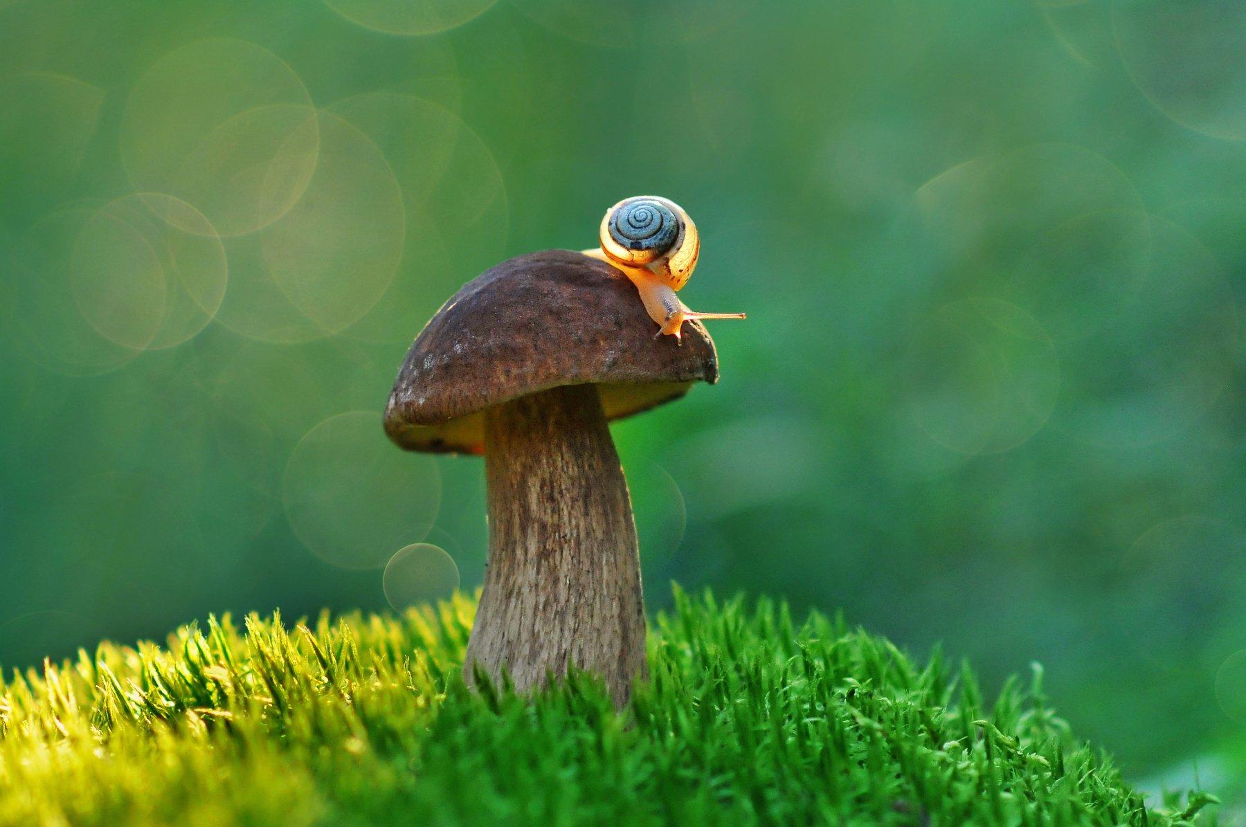 грибы, природа, макро, улитка, Александр Гвоздь