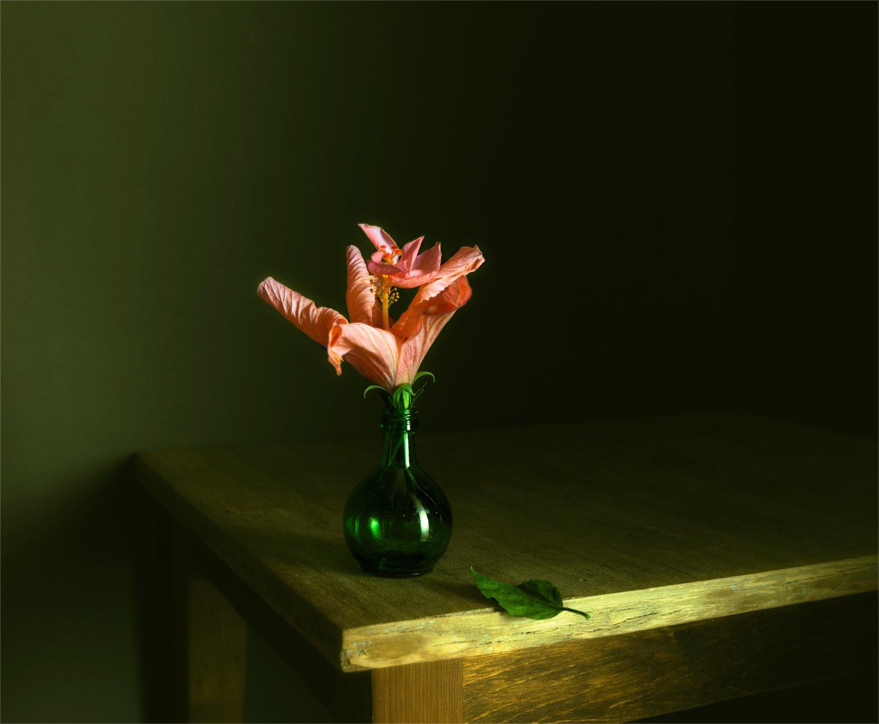 still life, натюрморт,   винтаж,  растение,цветы, гибискус, минимализм, Михаил MSH