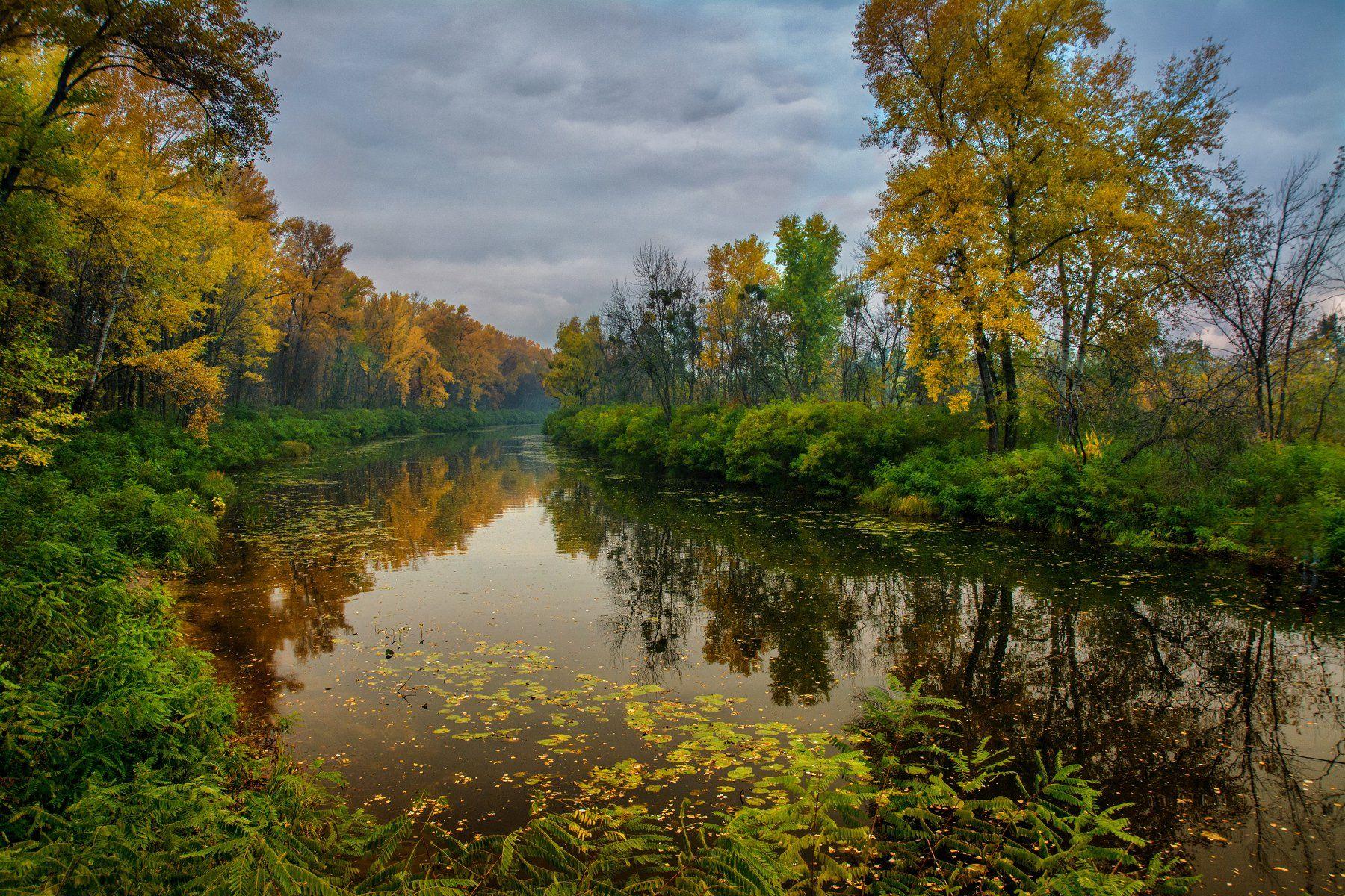 landscape, пейзаж,  лес,  деревья,  природа, осенние листья, река, вода, берег, осень, Михаил MSH
