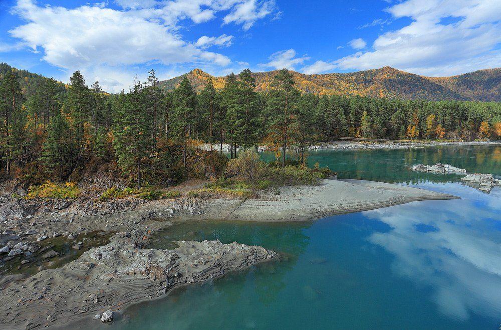 природа, пейзаж, алтай, катунь, лес, осень, река, горы, остров, Sokolova Tatiana