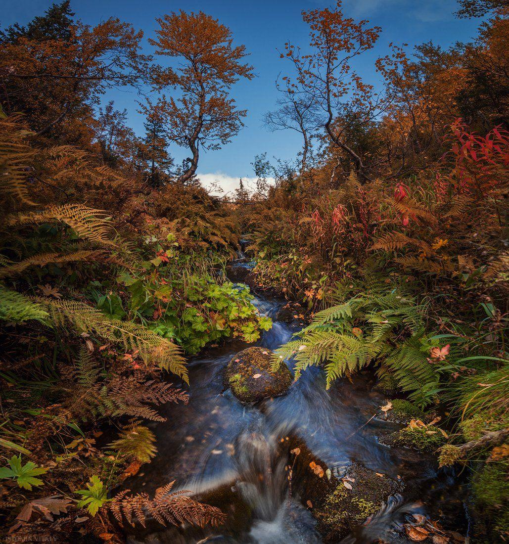 осень,панорама,пейзаж,россия,хибины,кировск,цвет,вода,свет,трава,красиво,перспектива, Истомин Виталий