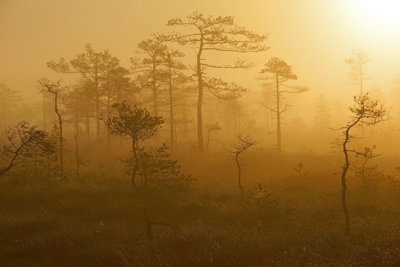 лес, ленинградская, область, Петр Косых