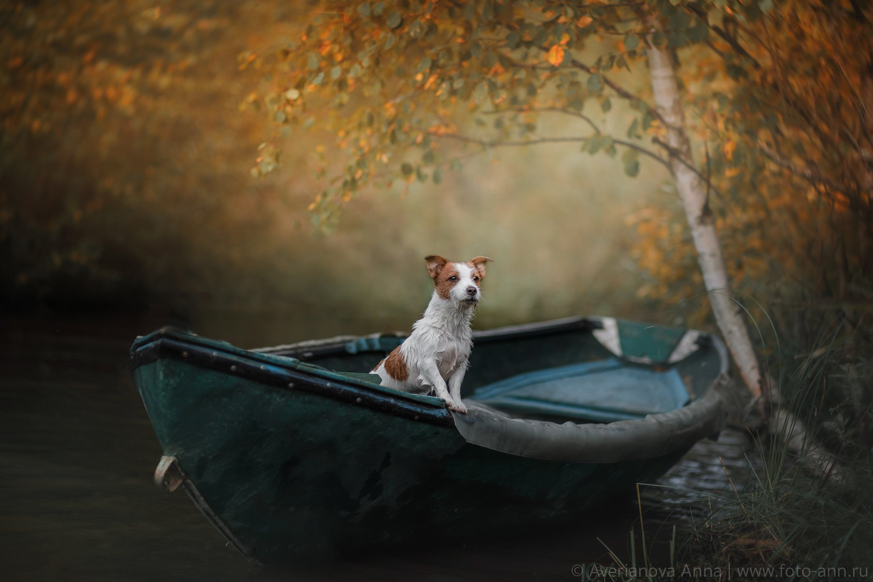 собака, природа, лодка, Анна Аверьянова