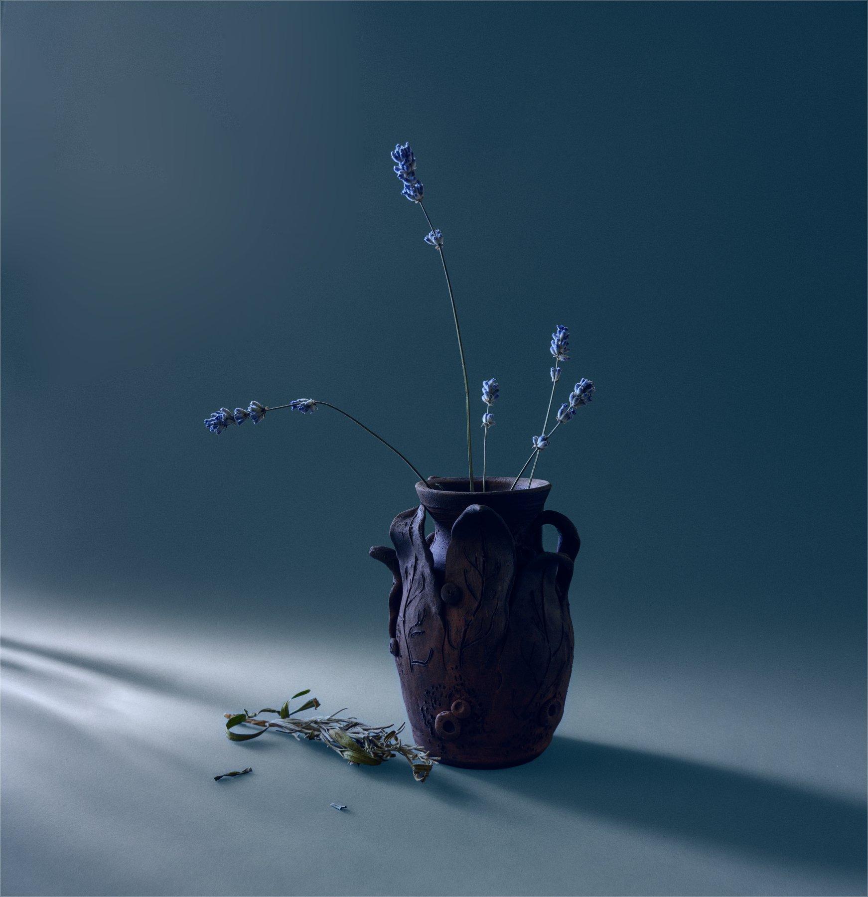 still life, натюрморт,    растение, природа,  ветка,  тень, минимализм, лаванда, цветы, Михаил MSH