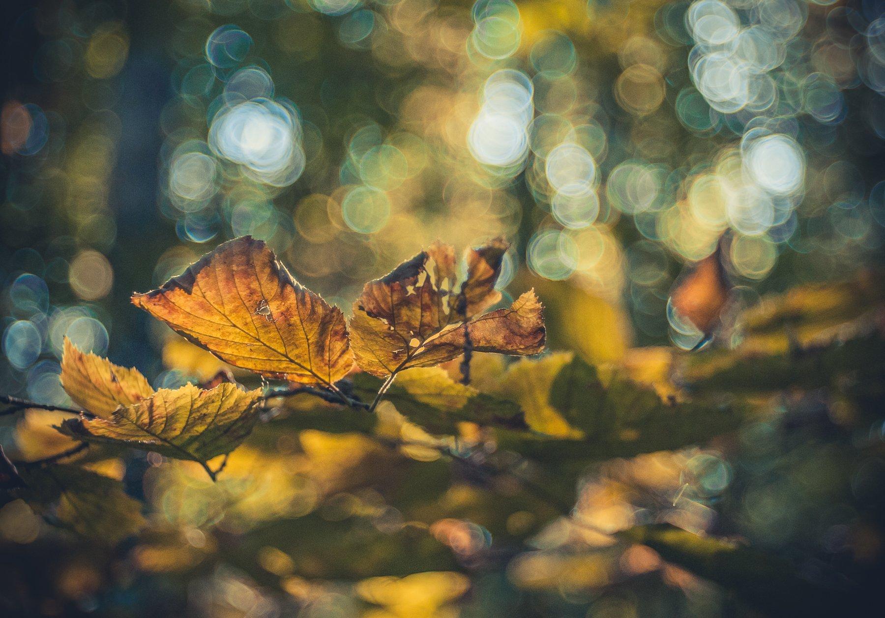 листья, осень, боке, свет, дерево, Дмитрий Иванов