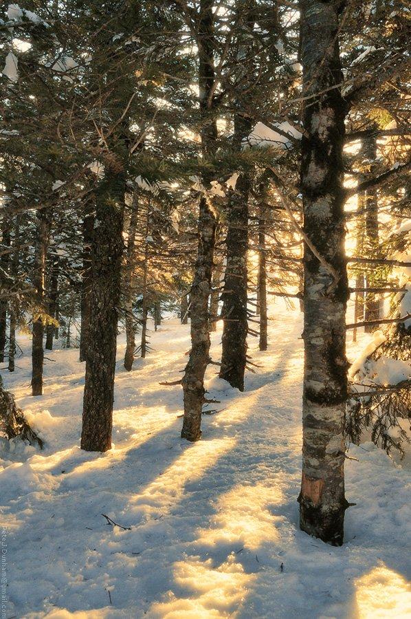 май, весна, сихотэ, алинь, снег, тайга, лес, хвойный, утро, рассвет, тёплый, свет, прохлада, свежесть, гора, лысая, 1560, метров, над, уровнем, моря, Pete.J.Dunham