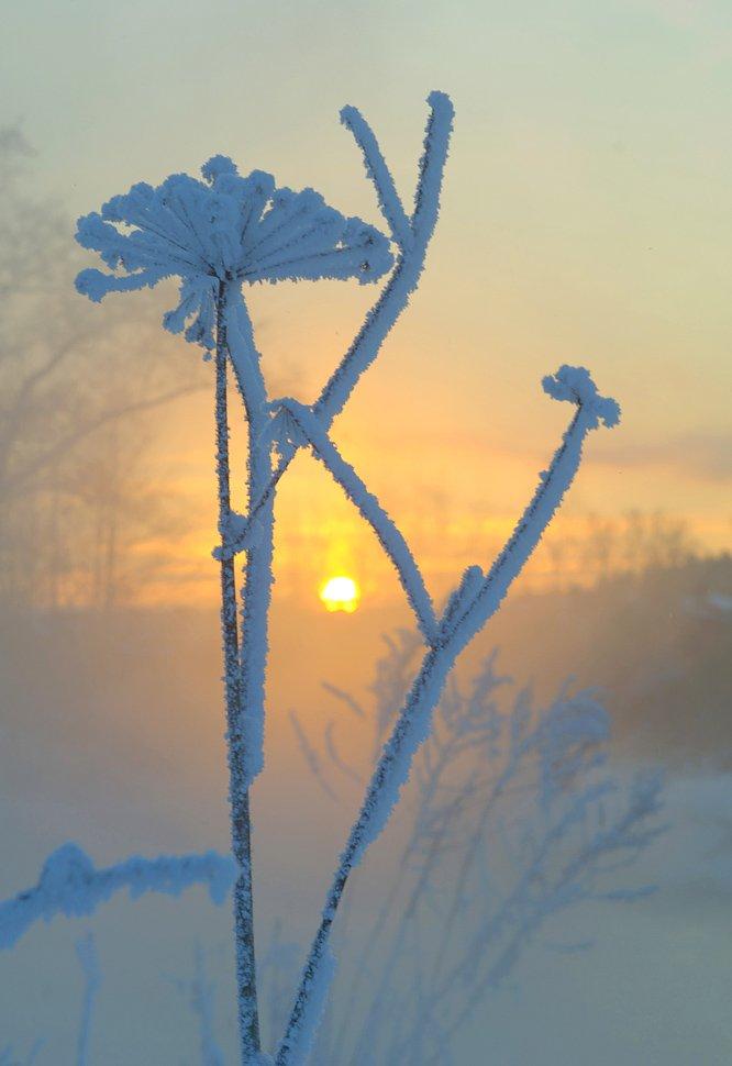 зима, мороз, солнце, Макс Шамота