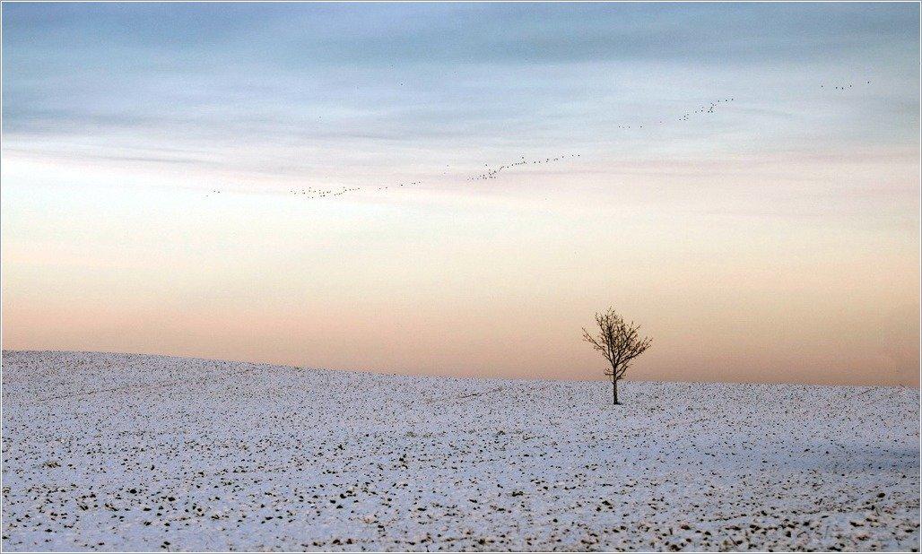 птицы, дерево,поле,минимализм, senato®