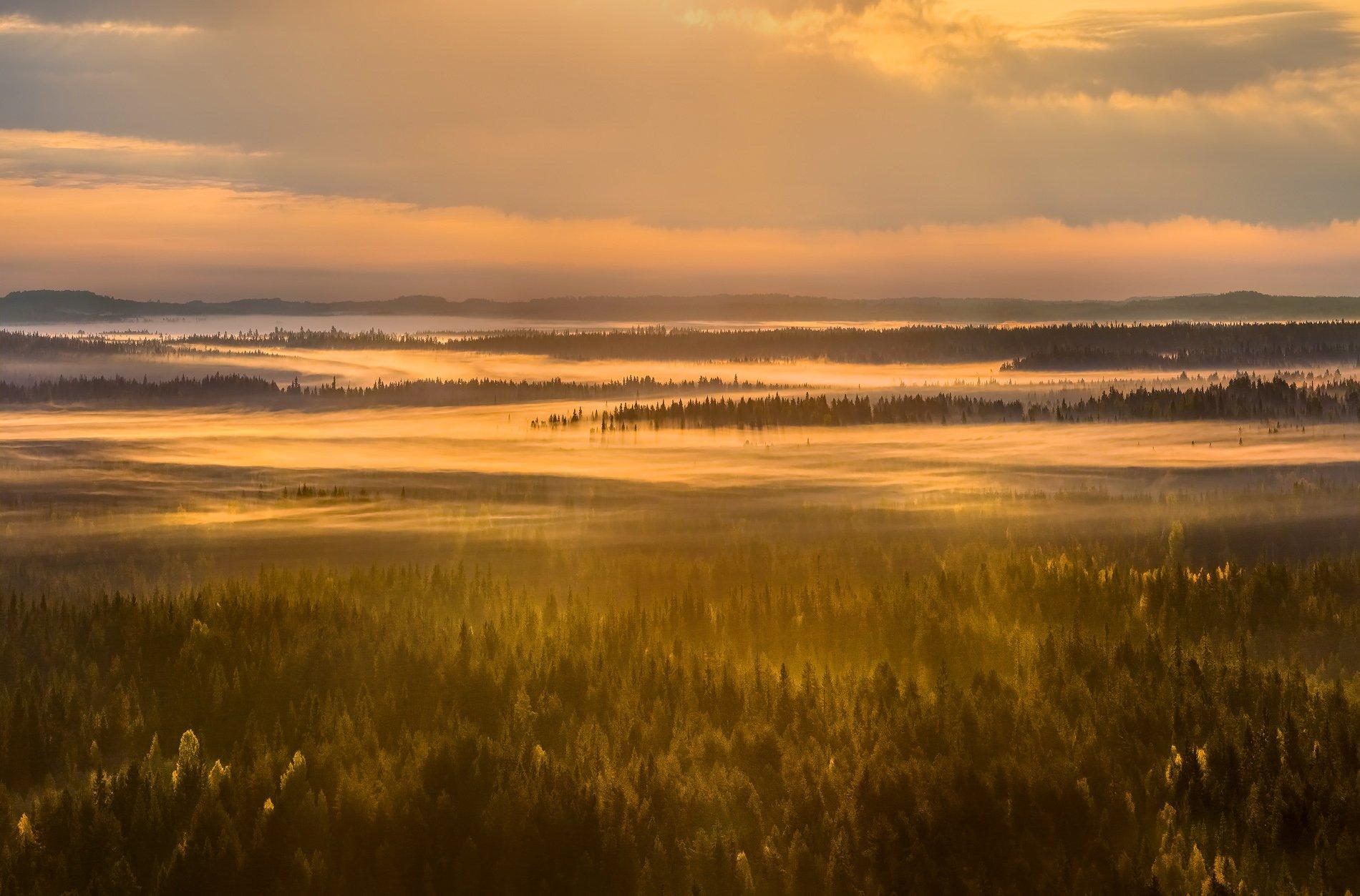 осень,  ленинградская область, лес, вепсский лес, рассвет, туман, луг, парк, заказник, солнце, тайга, ели, заповедная россия, резерват., Лашков Фёдор