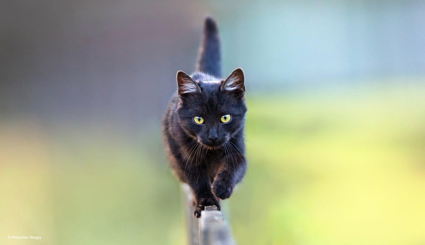 котенок, Полюшко Сергей