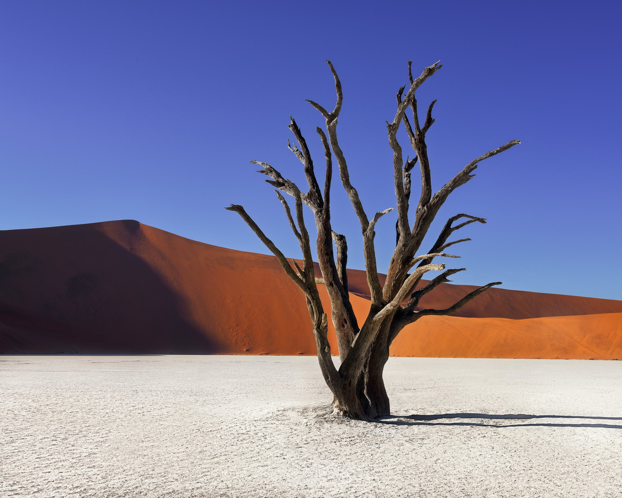 acacia, Africa, african, arid, beautiful, blue, branch, camelthorn, clay, day, daylight, dead, deadvlei, desert, drought, dry, dune, famous, forest, hot, lake, landmark, landscape, morning, namib, namibia, namibian, national, nature, naukluft, orange, out, anshar