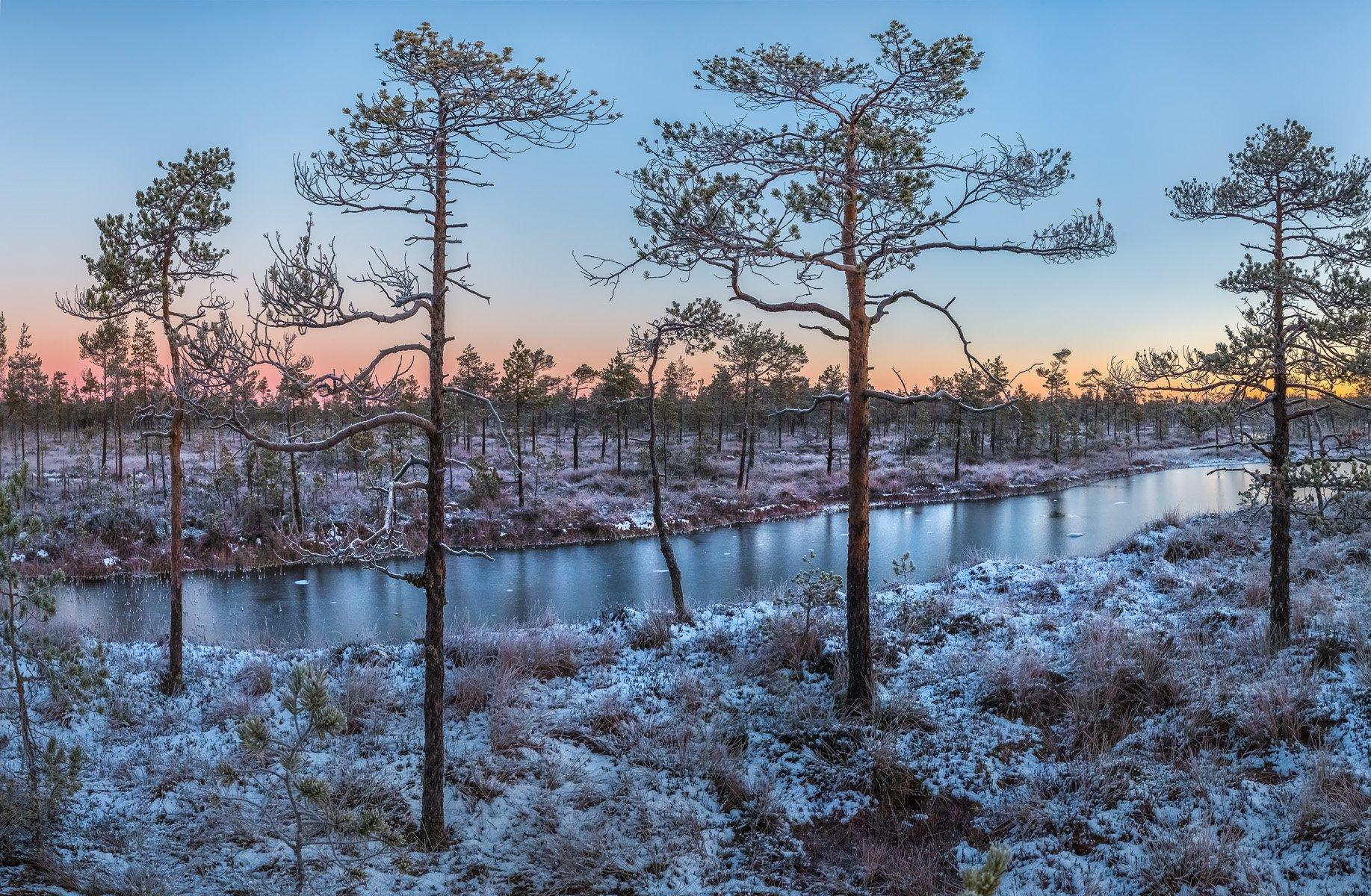 фототур, ленинградская область, деревья, сосна, болото, рассвет, осень, иней, мороз, озеро, снег, заморозки., Лашков Фёдор