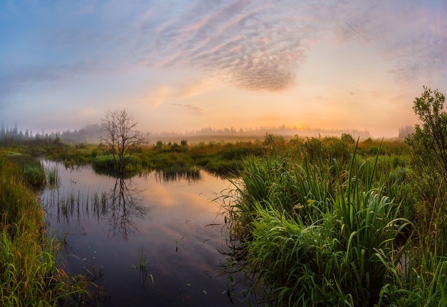 лето, август, ленинградская область, ручей, рассвет, трава, туман, облака, лес, отражение, магия, фототур, камыш,, Лашков Фёдор