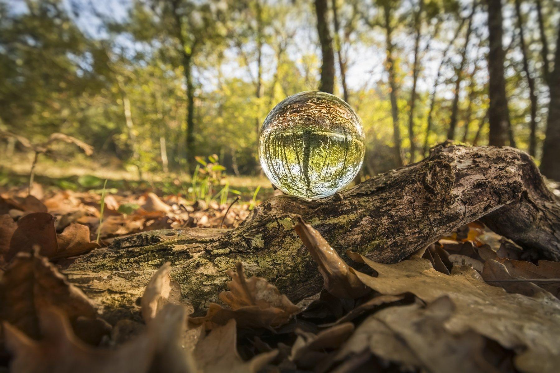 autumn, landscape, macro, nature, trunk, trees, photography, Antonio Bernardino