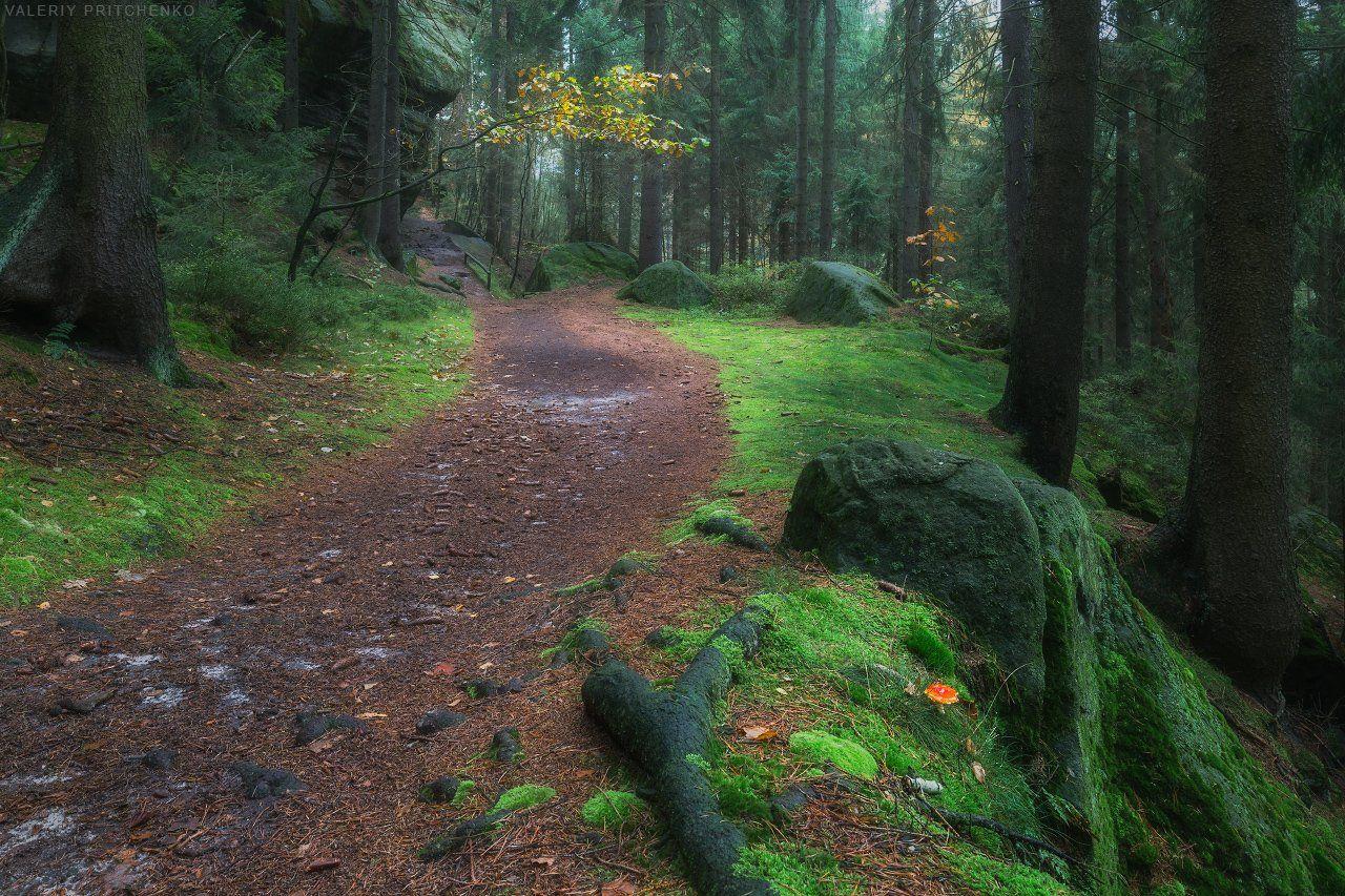Германия, лес, осень, Germany, Saxony, forest, autumn, Валерий Притченко