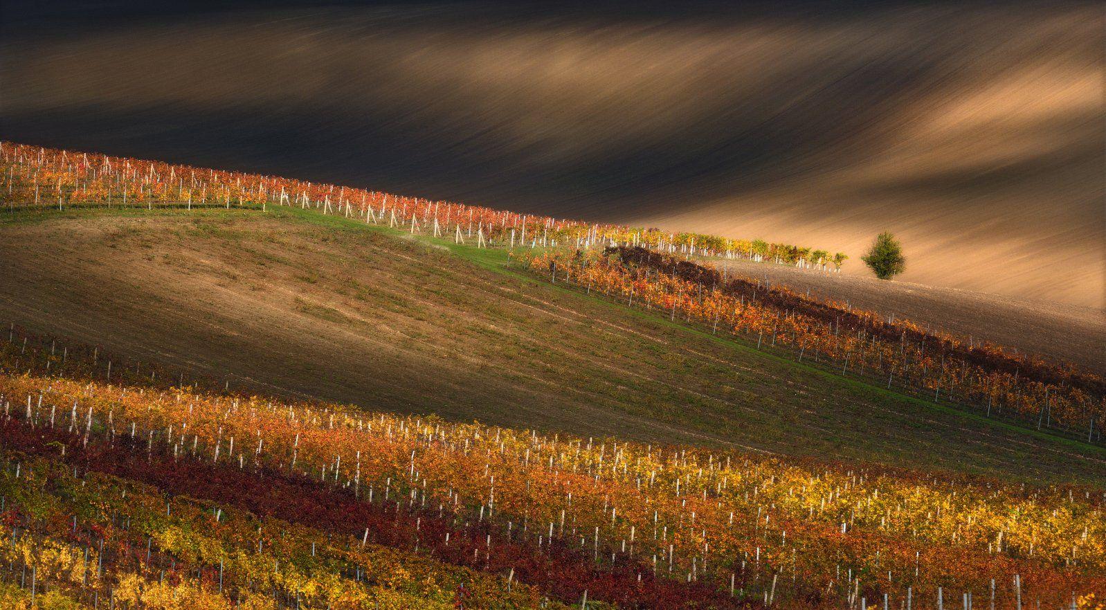 vineyard, grape, south_moravia, morava, czech, autumn, moravian, vine, vineyard_lines, line, wine, чехия, южная моравия, south moravian, вино, виноград, осень, Влад Соколовский