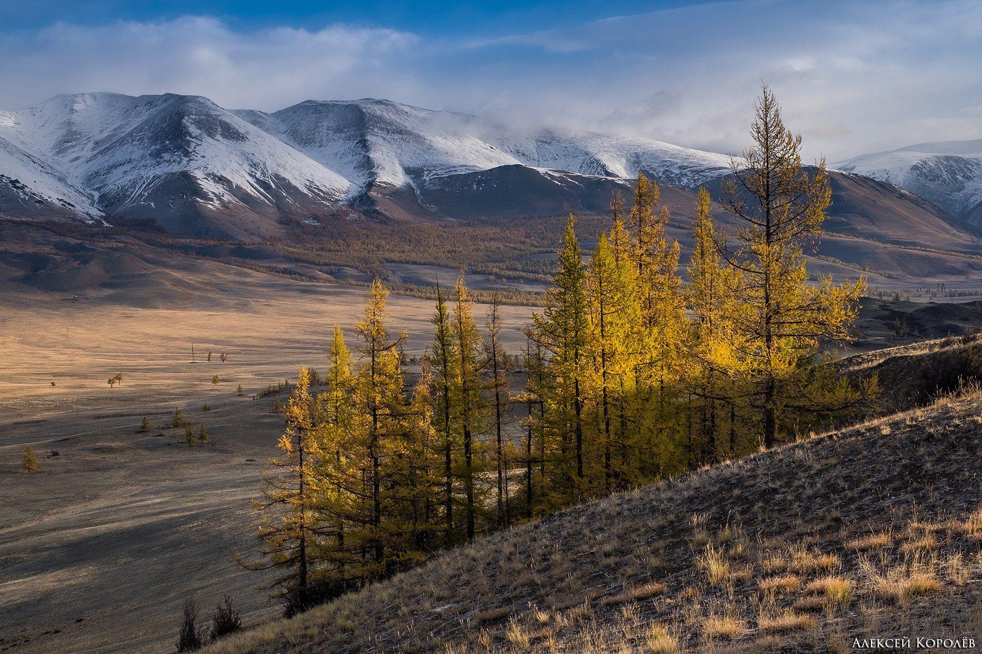 алтай, курайская степь, пейзаж, природа, осень, горы, Алексей Королёв