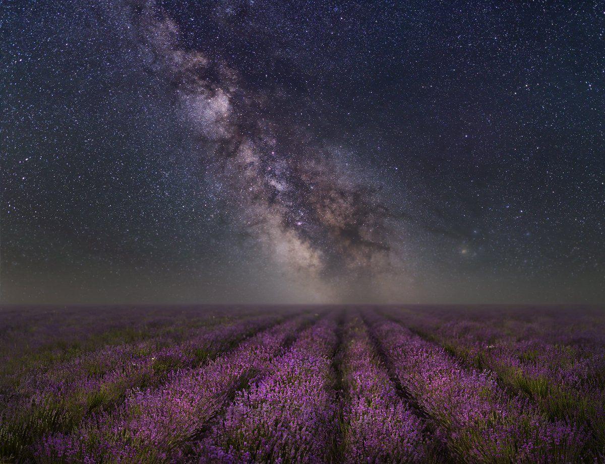 крым,россия,пейзаж,природа,ночь,звезды,млечный путь,лаванда,прованс,панорама,небо,longexposure,длинная выдержка,цветы,путешествие, Elena Pakhalyuk