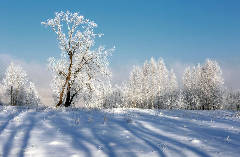 сибирь, зима, снег, новокузнецк, Галина Хвостенко