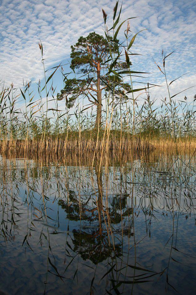карелия, пейзаж, озеро, дерево, отражение, Y.S.