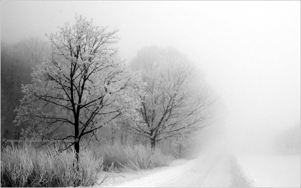 туман, mist, fog, lithuania, tree,winter, senato®
