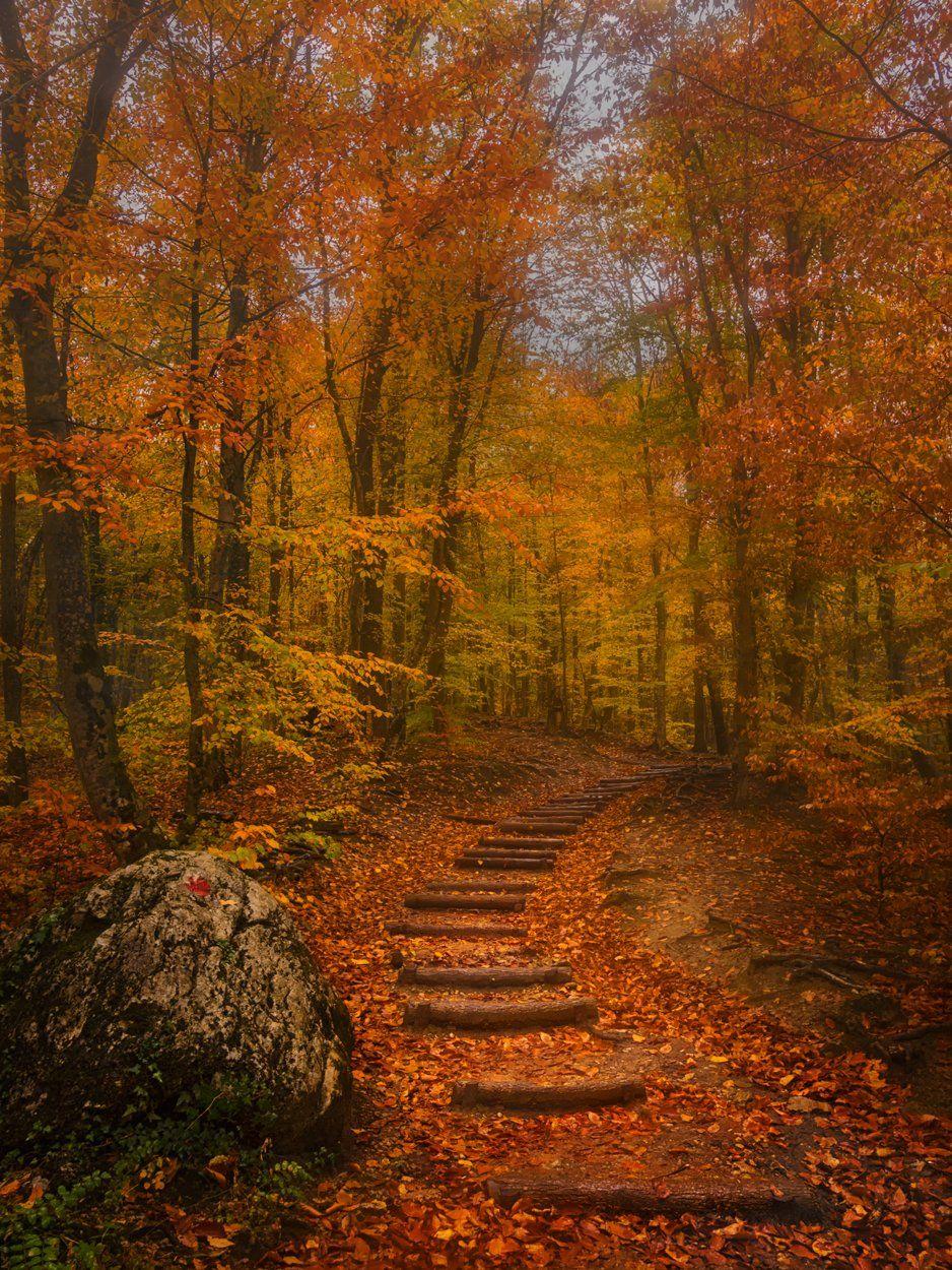 осень,крым,лес,природа,россия,лестница,тропа,дорога,деревья,листва,листья,золотой,желтый,туман,день,путешествие, Elena Pakhalyuk