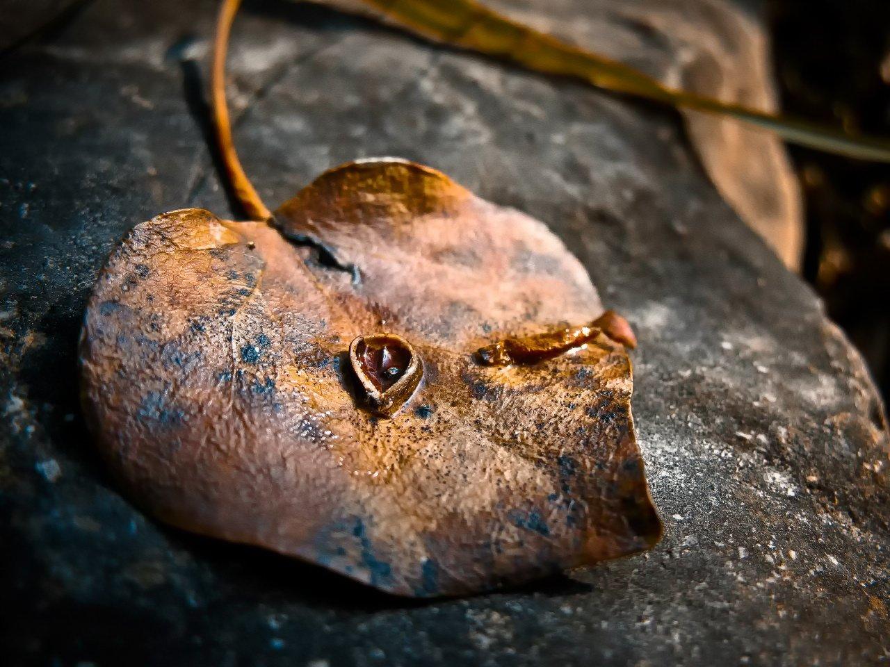 осень,макро,лист,камень,золотой,желтый,опавший,природа,крым,россия,осенний лист,день,свет, Elena Pakhalyuk