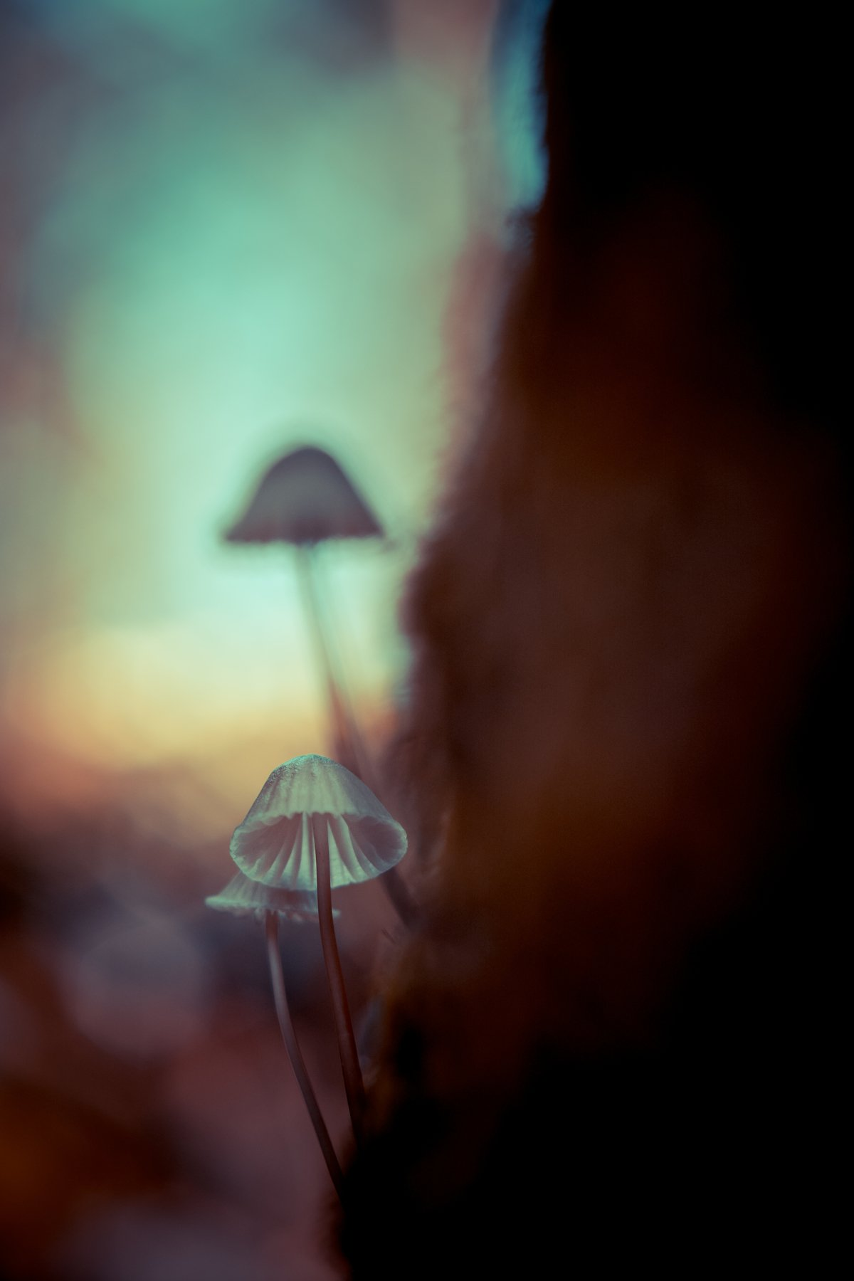 small, fungi, mushroom, art, close up, macro, nature, Antonio Bernardino