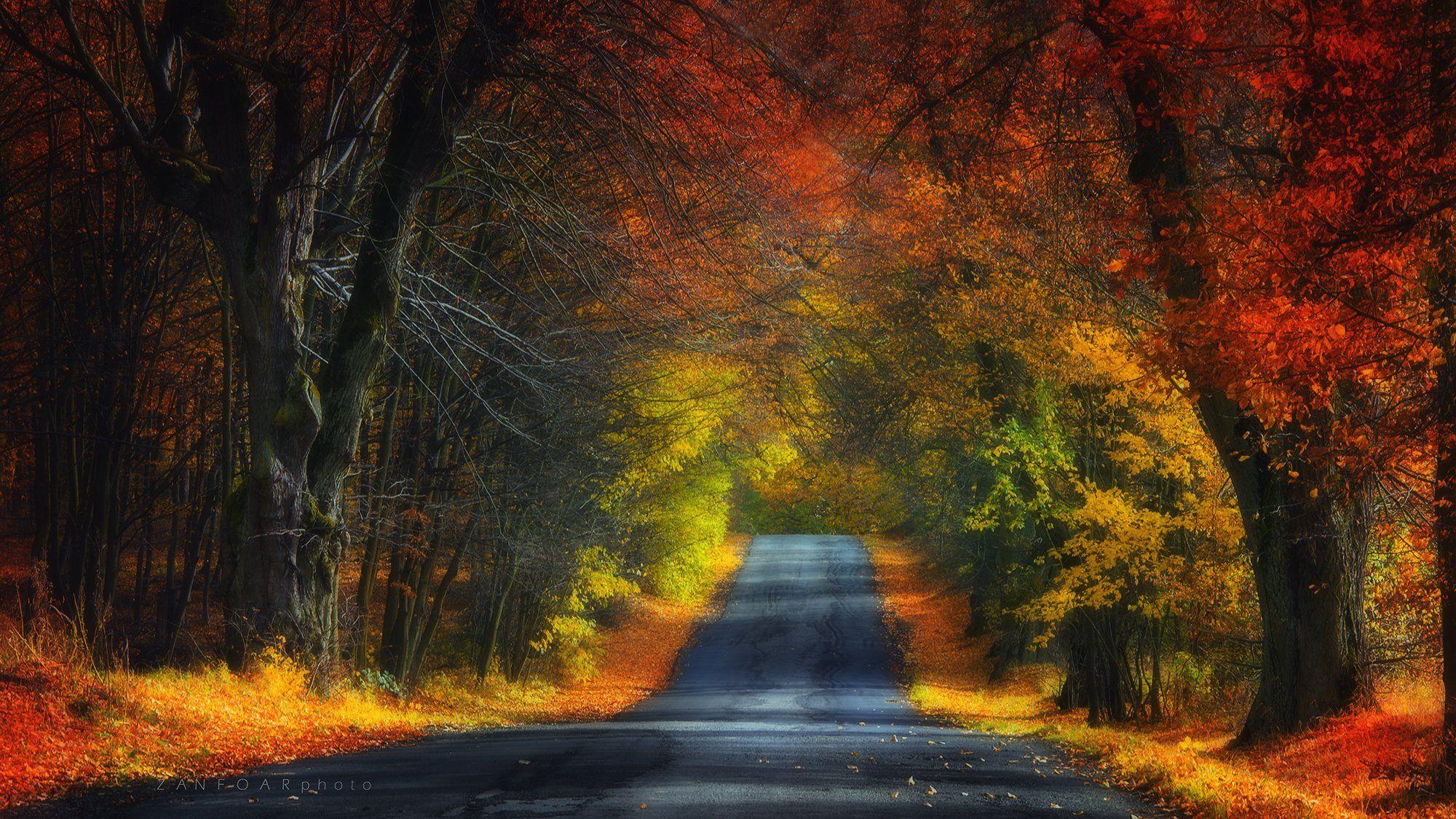 осень, цвета, аллея, путь, деревья, перспектива, zanfoar, никон, чешская республика, Zanfoar