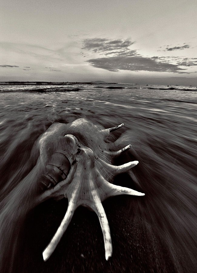море, раковина, ракушка, прибой, волна, пейзаж, Kostin Max