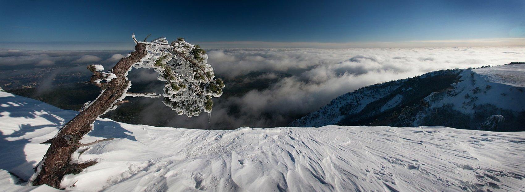 зима, сосна, снег, горы, Anastasia Aymilios