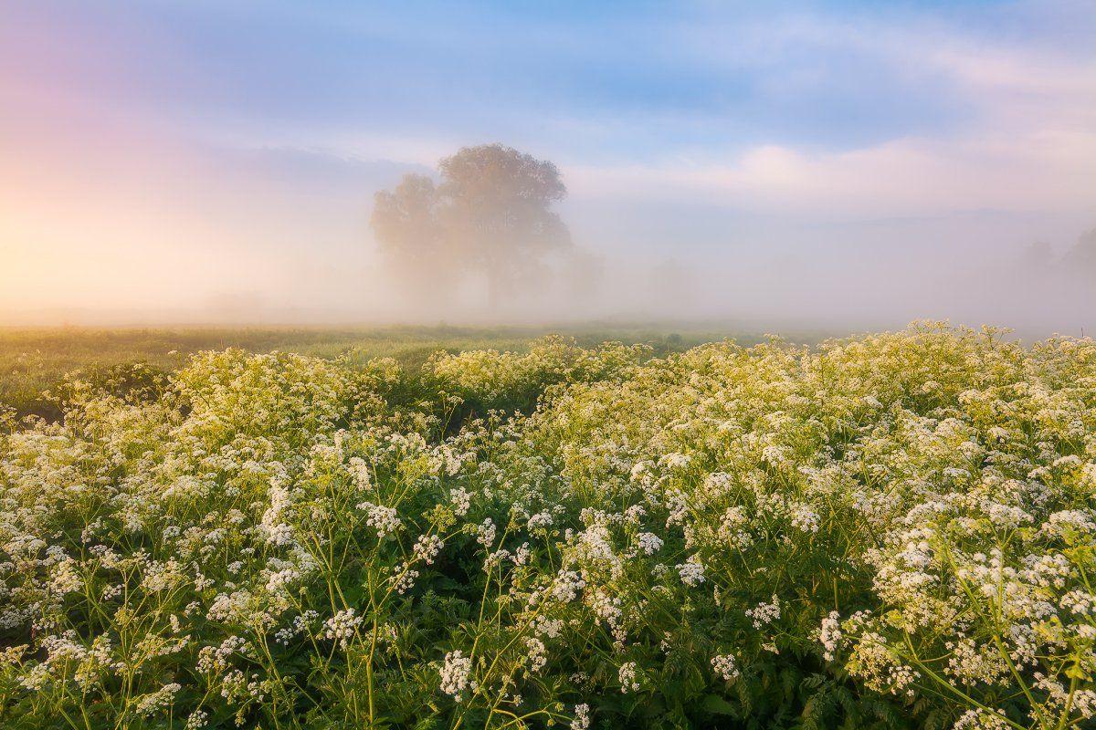 рассвет, туман, карпаты, горы, лето, Антон Петрусь