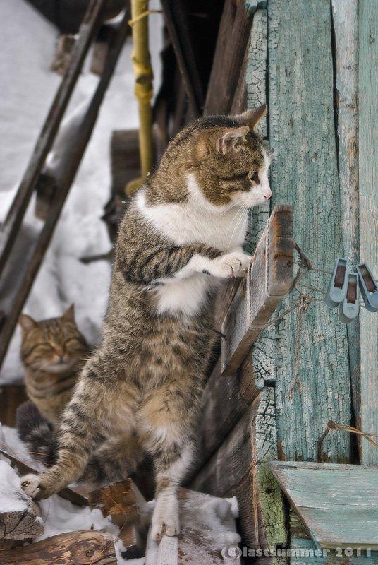 коты, прошлое лето