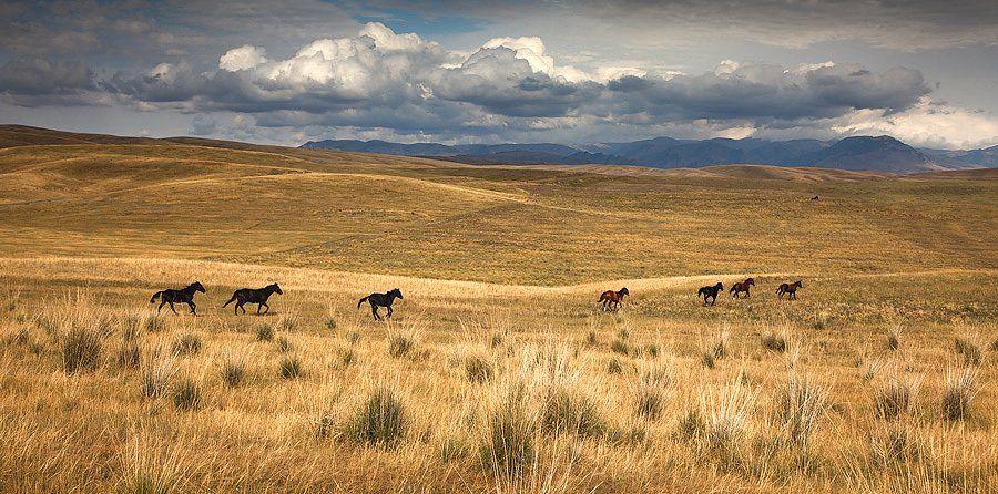 пейзаж, казахстан, лошади, Constantine Kikvidze
