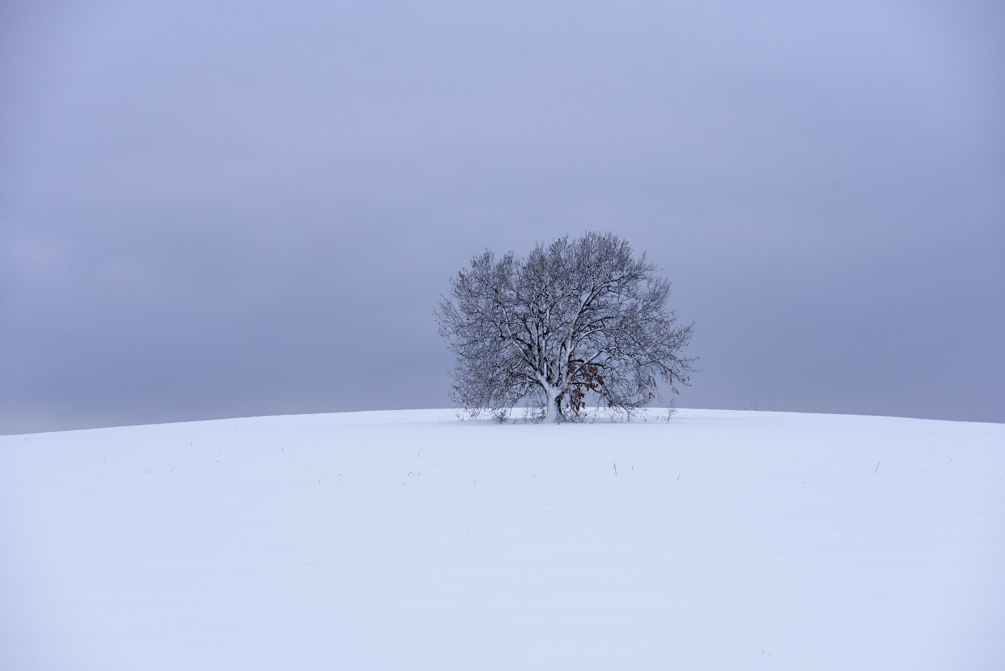 winter, snow, tree, landscape,calm, Милен Добрев