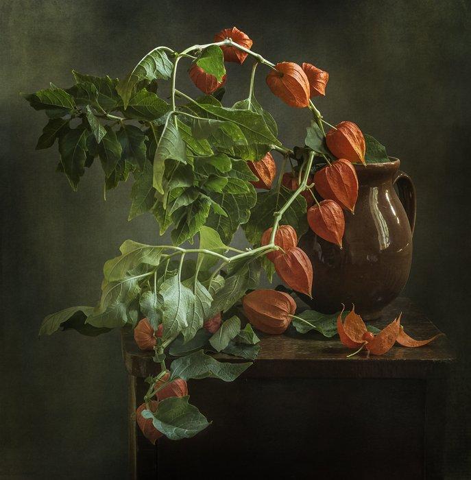натюрморт, цветы, still life, Оля