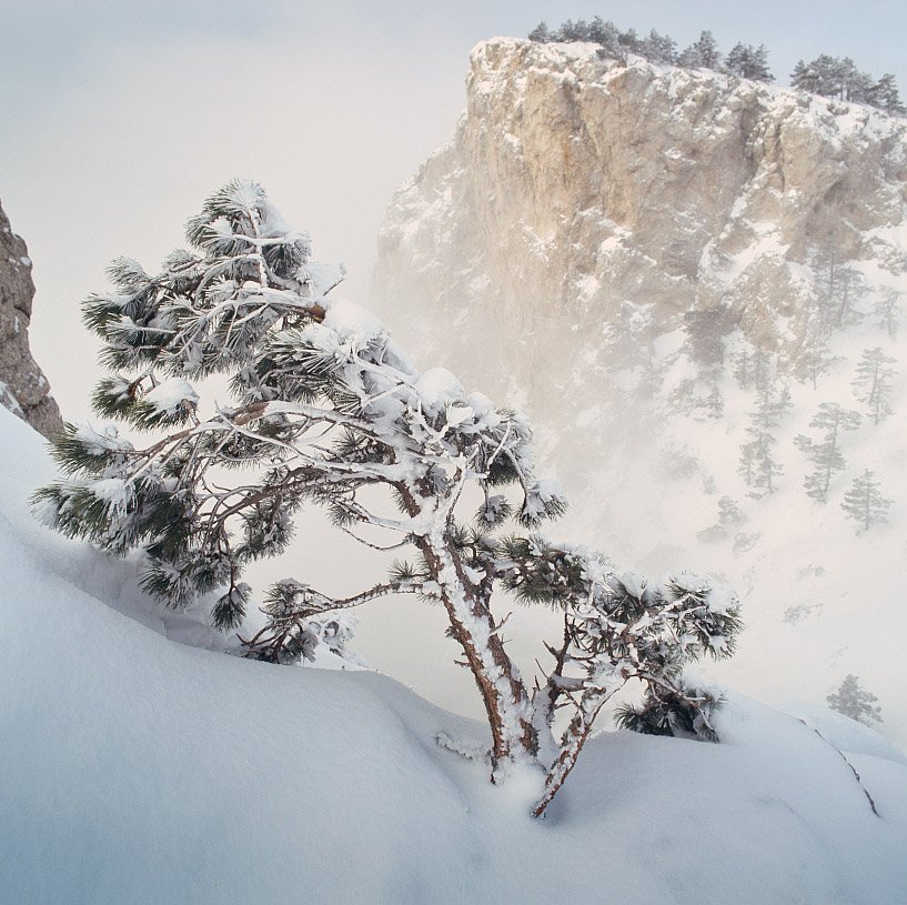 горы, снег, сосна, astia 100f, Алексей Пучков